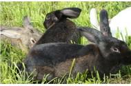 生态养殖兔肉皮草深加工产业一体化项目