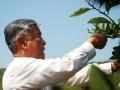 褚时健85岁再创业 烟草大王变身橙王的创业故事