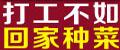 绿国鑫源芽苗菜-绿国鑫源芽苗菜种植-芽苗菜种植-芽苗菜无土栽培技术-绿国鑫源