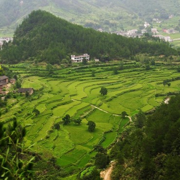 中心村田园风景