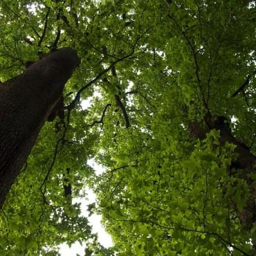 空山景区北景千年情侣古树