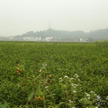 农业示范园区