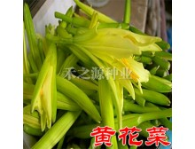 【黄花菜种子】保健类野菜种子 金针菜 健脑菜安神菜 8包包邮